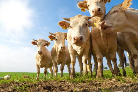 畜産と土地の関係について考える