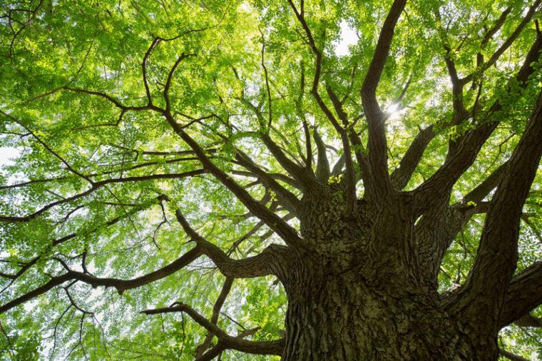 絶対にゆらがない頑丈な根を張る心の木