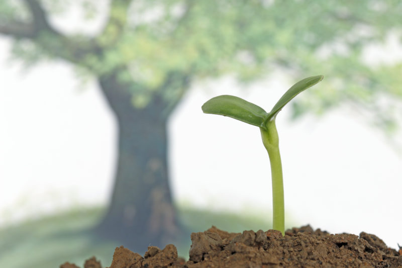 『心の木』を育て、自己肯定感を育もう~東洋思想と子ども瞑想