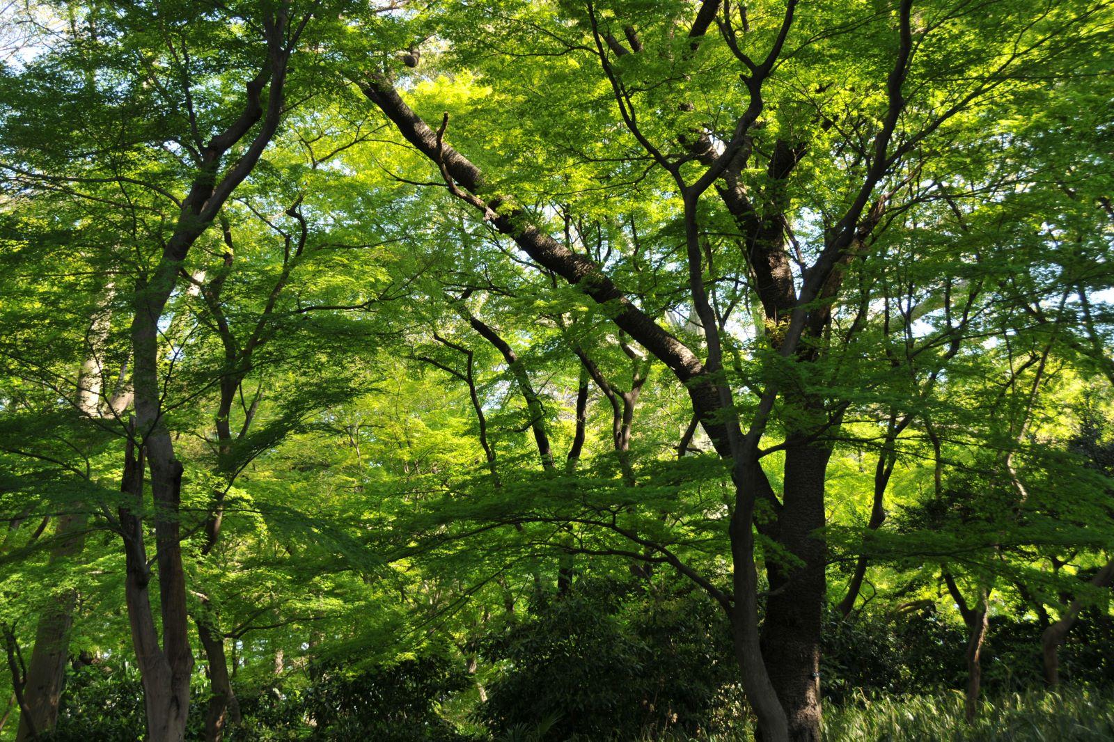 心の木瞑想 世界マザーサロン永井佐千子
